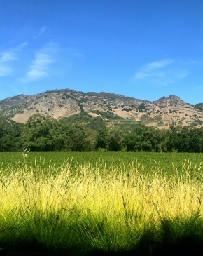 Napa Valley scene. ALL rights reserved. Copyrighted. NO permissions granted