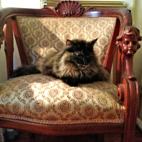 RC Cat presiding in her Chair of Glower. NO permissions granted. ALL rights reserved. Copyrighted