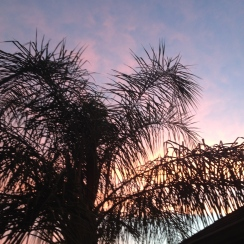 palm fronds against red dawn.ALL rights reserved. Copyrighted. NO permissions granted