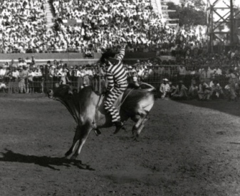 Vintage rodeo picture. 1949. Bull rider at Prison Rodeo, Huntsville , TX (Texas Tribune image)