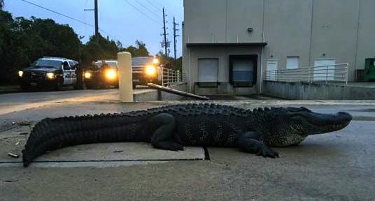 Alligator Tire Art - Bing images