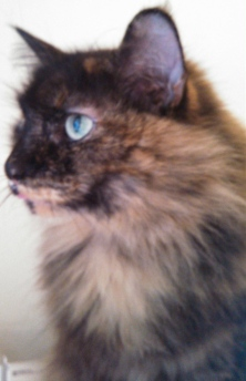 NO permissions granted for image of RC Cat staring. ALL rights reserved. Copyrighted.