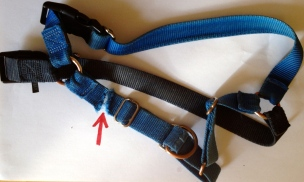 dog harness chewed. NO permissions granted. All rights reserved. Copyrighted