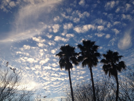 No permissions granted for this image of palm trees and clouds in winter skyI. ALL rights reserved. Copyrighted