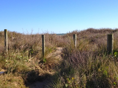 Path through Galveston's dunes looking towards the beach. ALL rights reserved. NO permissions granted. Copyrighted