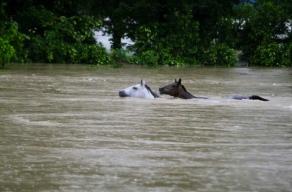 2 horses swimming. (mulligan/hou.chron/.chron.com)