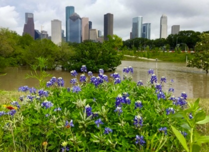 skyline.bluebonnets and downtown. (chron.com)