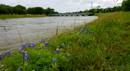 Bluebonnets by bayou. chron.com