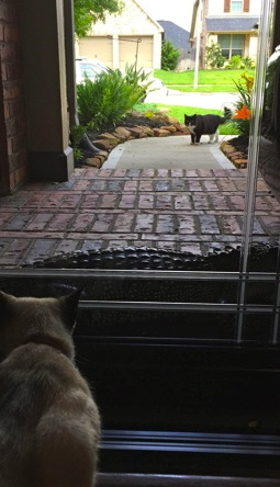 cats and univited gator.at the door (Click2houston.com)