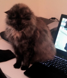 ALL rights reserved for this image of cat and on computer. NO permissions granted. Copyrighted
