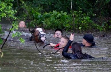 people swimming and saving horse.(Mark Mulligan/Houston Chronicle/chron.com)