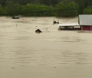 sHorses struggling in flood waterand stable. (abc13 KTRK)