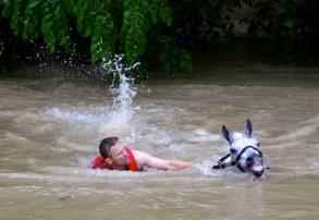 white horse and man swimming to shore.(M.Mulligan/Hou.chron)