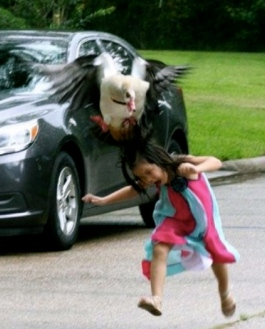 Summer gets attacked by a a mother goose. (Her sister Stevie b. Twitter/ch13 news)