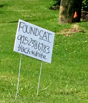lost cat sign. NO permissions granted. ALL rights reserved. Copyrighted