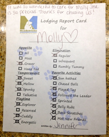 Molly's recent report card. ALL rights reserved. NO permissions granted. Copyrighted