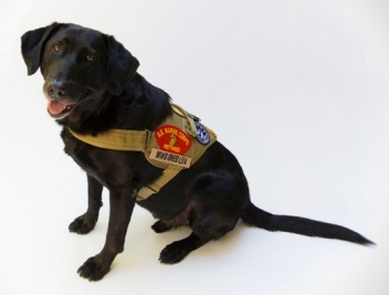 Retired US Marine Miltary working dog, Oreo. (Missionk9.org)