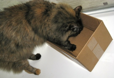 cat in a box. ALL rights reserved. NO permissions granted. Copyrighted