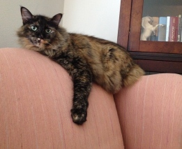 Cat on wingback chair. ALL rights reserved. Copyrighted. NO permissions granted.