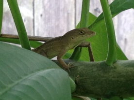 Lizard sentry on branch. ALL rights reserved. NO permissions granted. Copyrighted