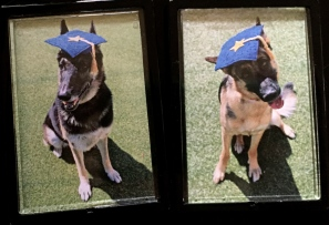 The German and Bella in graduation hats ALL rights reserved. Copy roghted. NO permissions granted