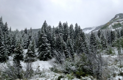 Snowy trees along Colorado roadway driving to Denver. ALL rights reserved. NO permissions granted. Copyrighted
