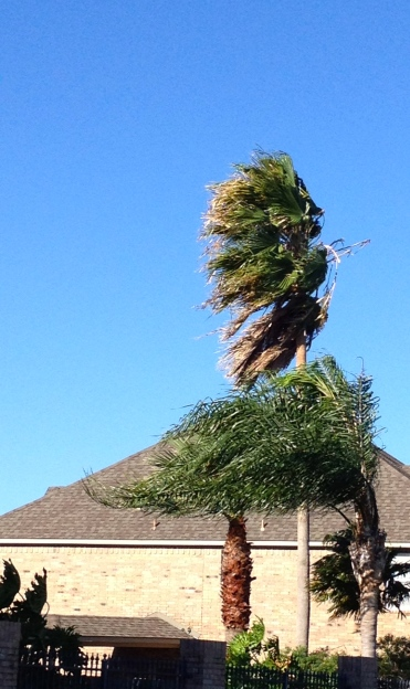 Palms in the wind. ALL rights reserved. Copu righted. NO permissions granted