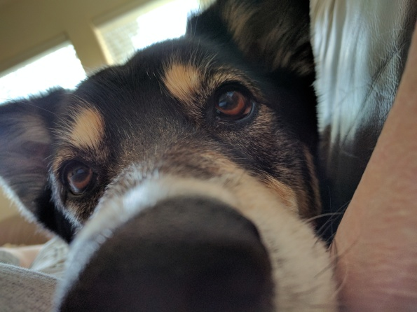 Dog nose in your face. ALL rights reserved. NO permissions granted. Copyrighted