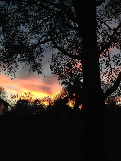 Dark Oak tree against a glowing sunset. ALL rights reserved. Copyrighted. NO permissions granted