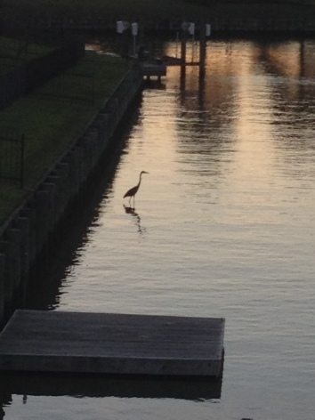 Waterbird by dock at sunset. ALL rights reserved. NO permissions granted. Copyrighted