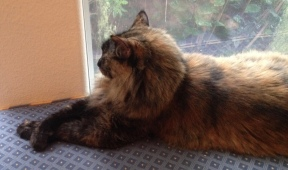 Cat with crossed paws on windowseat. ALL rights reserved. Copyrighted. NO permissions granted