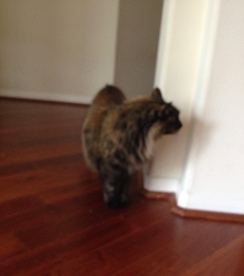 Cat looking around corner. ALL rights reserved. Copyrighted. NO permissions granted