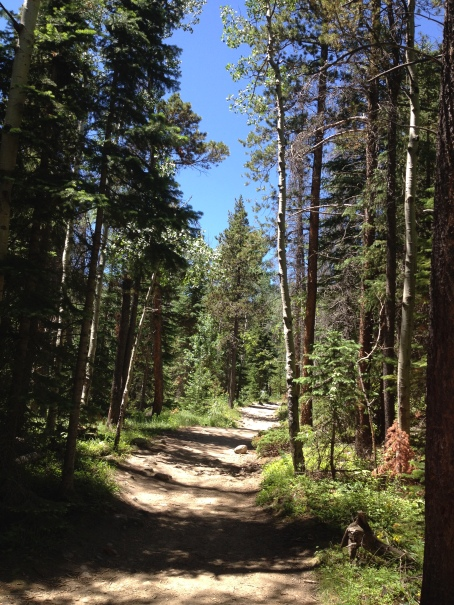 Rocky Mountain trail. Cascade Falls route. NO permissions granted. ALL rights reserved. Copyrighted.