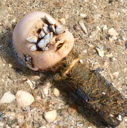 Creepy weird doll head covered with sea shells on eyes found on beach, Boliver, TX (Debra Croy Nelson/Facebook)