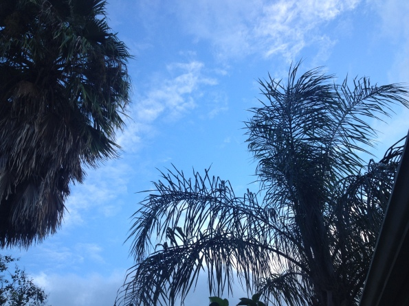 Blue sky and palms after Hurricane Harvey. Image © ALL rights reserved, copyrighted, NO permissions granted