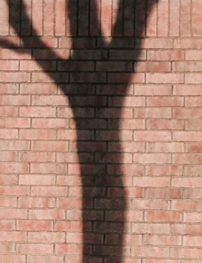 tree shadow against brick wall.© Venus de Milo pose appealing to Aphrodite< Goddess of Love and Beauty, for help (ALL rights reserved. NO permissions granted. Copyrighted )