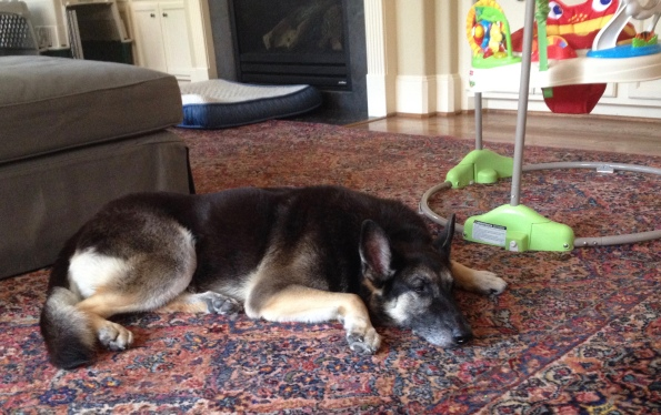 German shepherd dog asleep on floor. (Image: ©ALL rights reserved. Copyrighted. NO permissions granted