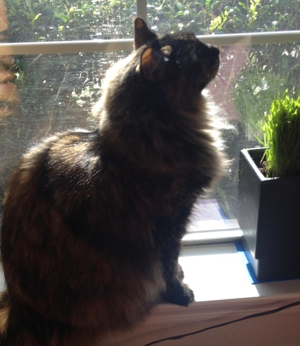Cat silhouetted in sunny window. Image ©. ALL rights reserved. Copyrighted NO permissions granted
