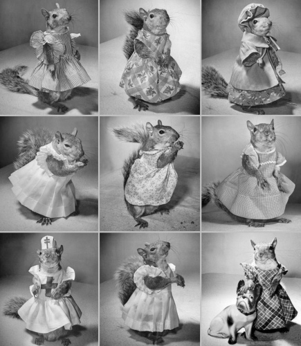 Fancy costumed squirrel. Tommy Tucker, tame Eastern gray squirrel who visited hospitals, entertained children and supported the war effort. Time, Inc. Nina Leen/Life mag. 1944/USPD artist life, pub.date, Commons.Wikimedia,org