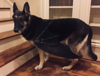 German Shepherd in dragon Halloween costume. Image: ©all rights reserved, no permissions granted, copyrighted )