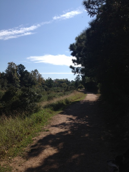 Middle path of Pine Gully. (Image:© copyrighted, all rights reserved, no permissions granted)