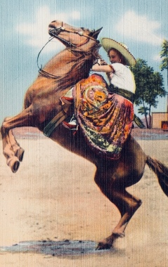 Vintage horsewoman in traditional Mexican vaquero skirts on rearing horse. postcard. 1930-45. TIchnor Bros collection, Boston Lib. (USPD. Pub.date, artist life,) Commons.wikimedia.org)