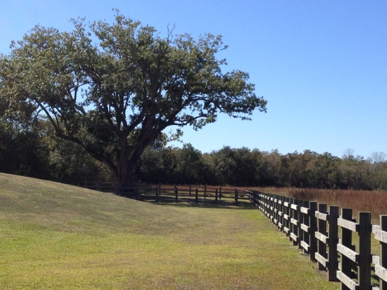 Oak tree and rail fence. (Image ©: all rights reserved, copyrighted, NO permissions granted)