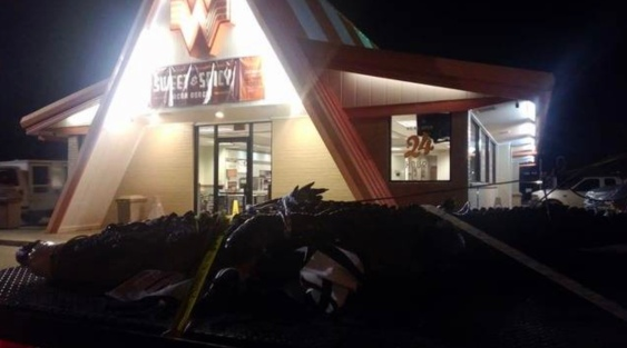 Large gator tied up in truck at Whataburger (image by Chance Ward)