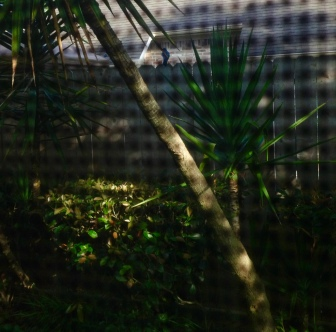 Bird on fence as seen through window screen (© Image, all rights reserved, copyrighted, No permissions granted)