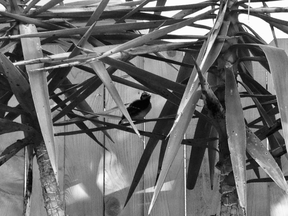 Hiding bird. (© Image, all rights reserved, copyrighted , NO permissions granted)