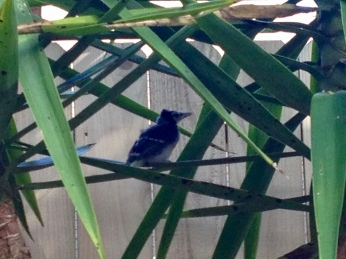 Baby bird in plant. (© Image All rights reserved, NO permissions granted, Copyrighted)
