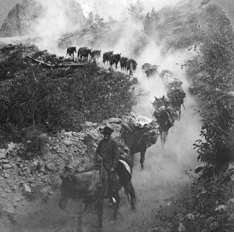 Vintage photo. 1906 burro train bringing gold from mines near Ouray, CO. (USPD. pub. date, artist life/Commons.wikimedia.org)