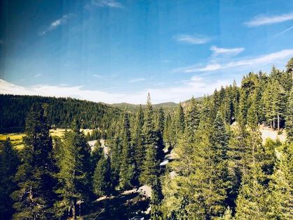 Forests around Tahoe. (© Image: all rights reserved, copyrighted, NO permissions granted)
