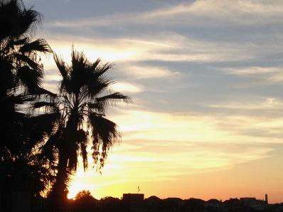 sunset and palm trees ( Image ALL rights reserved, copyrighted, no permissions granted)